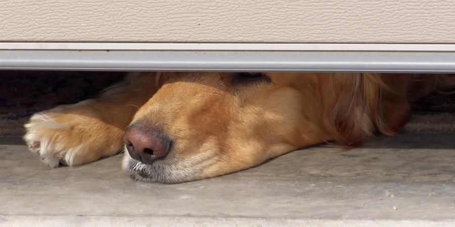 Garage Doors with Pet Doors by ArmRLite